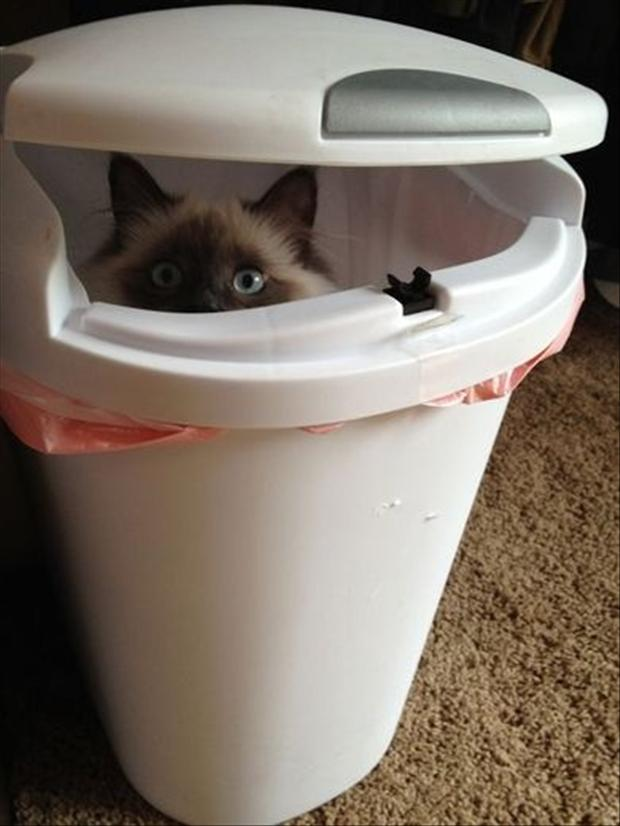 funny picture of cat in the trash can