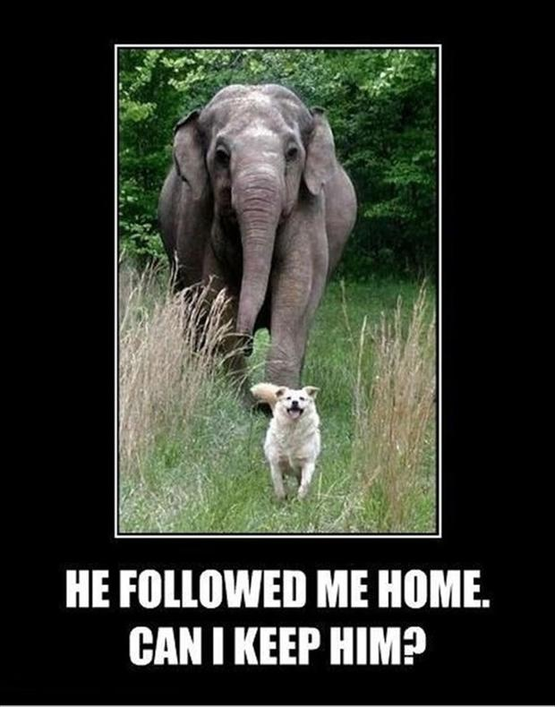 Elephant jokes - photo#30