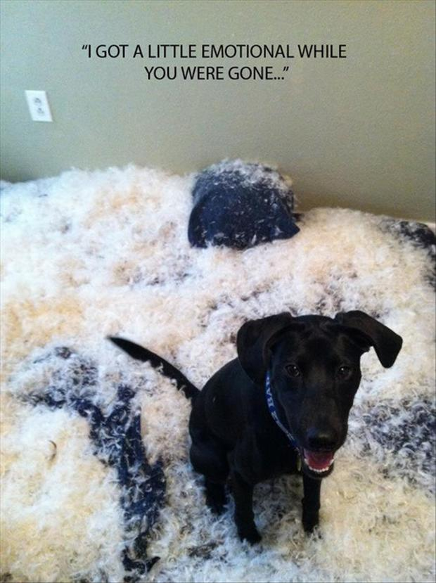 funny pictures, dog makes a big mess