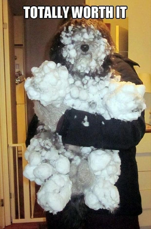 funny pictures of dogs with snow on them