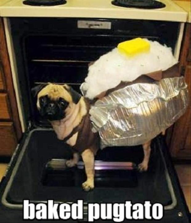 funny potato, pug dogs