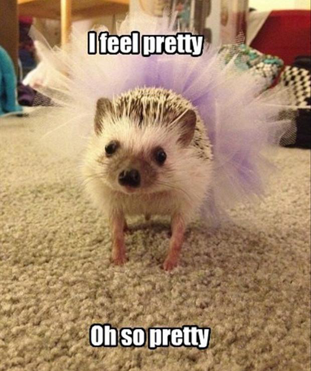 funny pretty animals