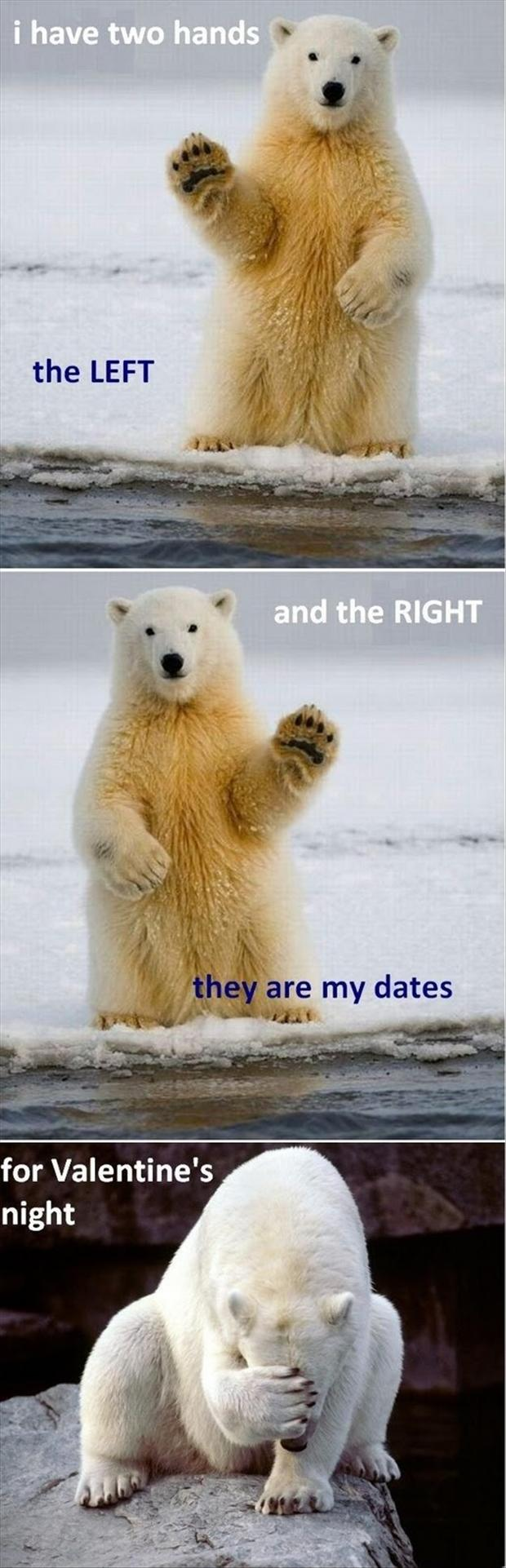 Funny Valentines Day Pictures, Polar Bears