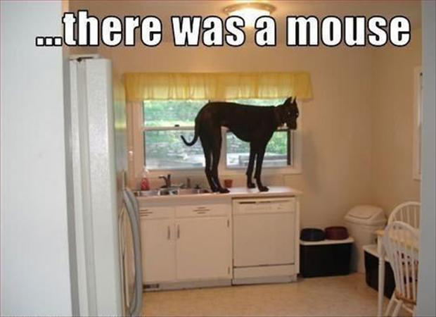 go on the counter, funny pictures