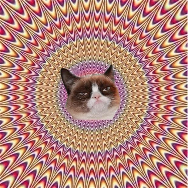 grumpy cat on drugs