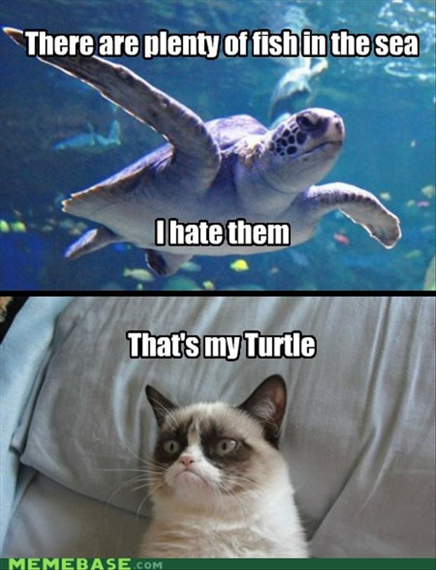 grumpy cat, turtle