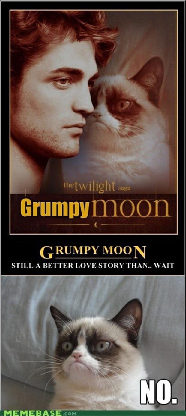 grumpy cat, twilight, funny pictures