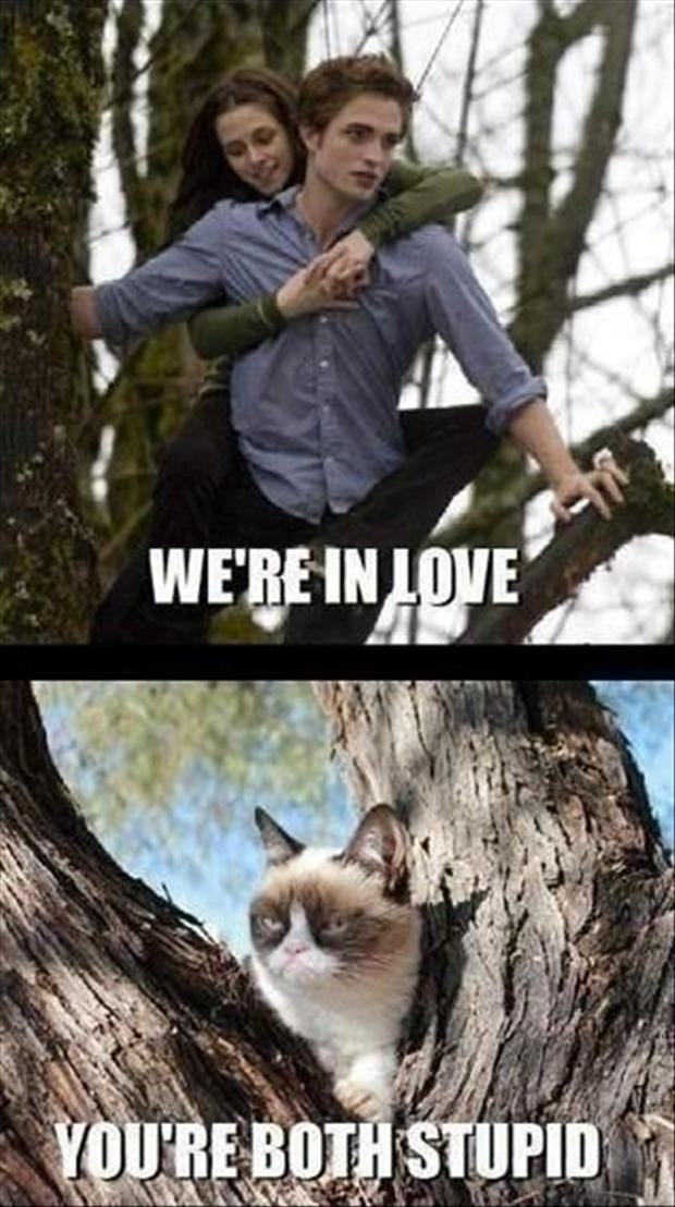 grumpy cat, twilight pictures
