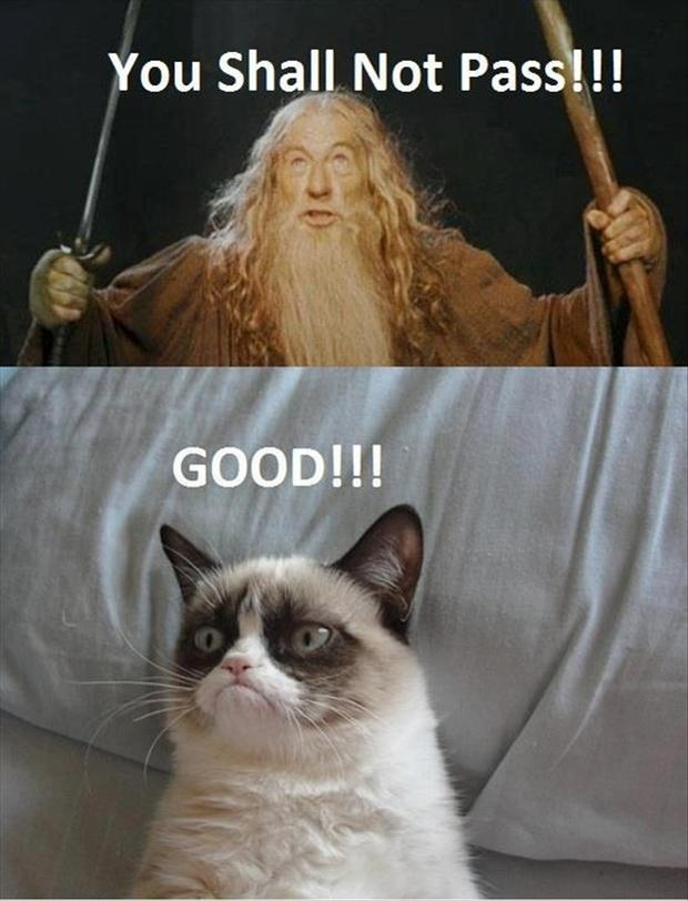 grumpy cat, you shall not pass