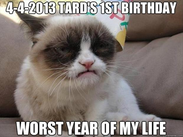 grumpy cats first birthday, funny pictures
