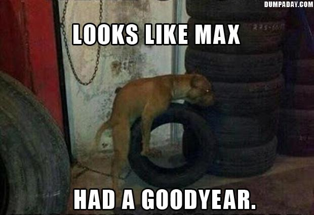 here is to a goodyear, funny dog having sex with a tire