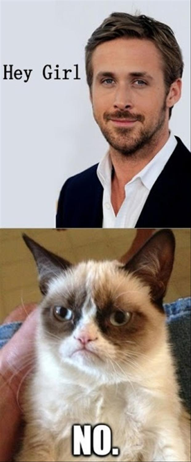 hey girl, grumpy cat