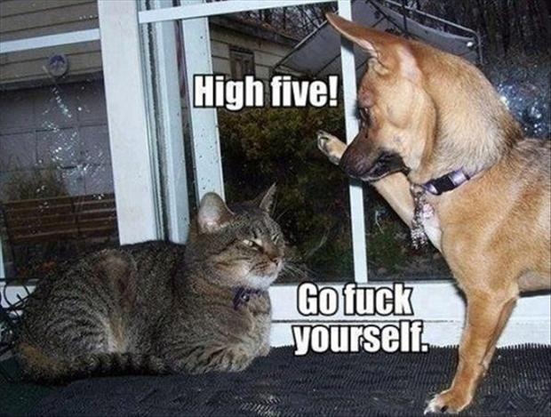 high five from dog