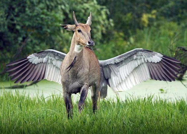 horse with wings, optical illusions