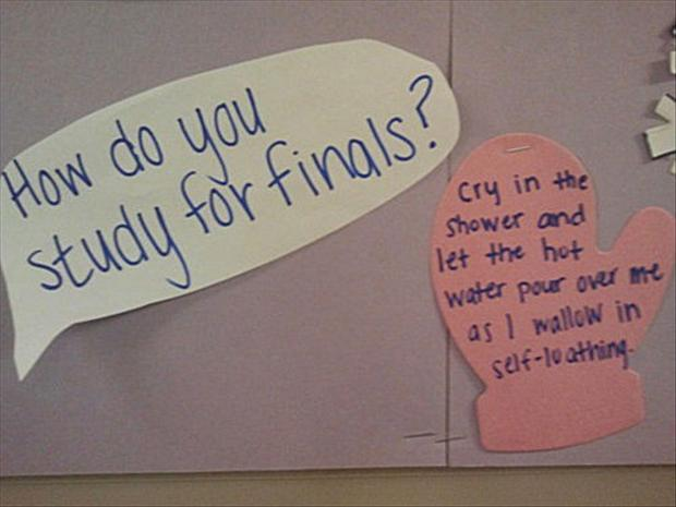 how to study for finals, funny pictures