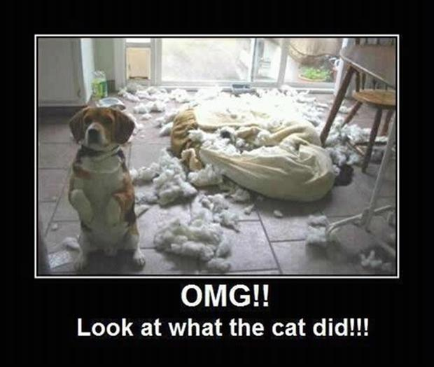 innocent dog, look what the cat did, funny animals