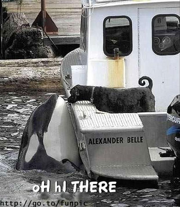 killer whale, dog, funny pictures