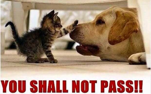 kitten and dog, you shall not pass