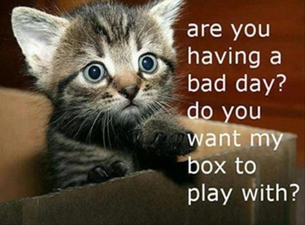 kitten in a box, cute