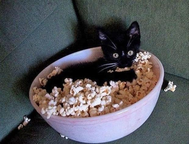 kitty enjoys popcorn, funny pictures