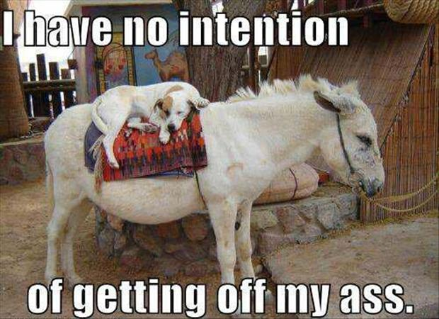 lazy dog, funny pictures