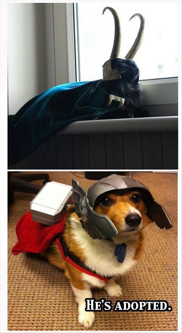 loki and thor, dog and cat, he is adopted