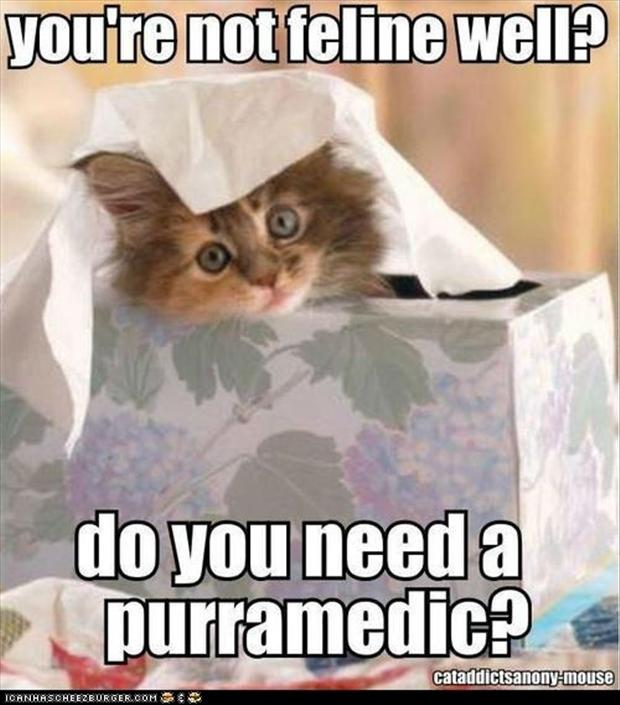 lol cats funny sick pictures   dump a day