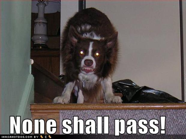 mean dog, you shall not pass