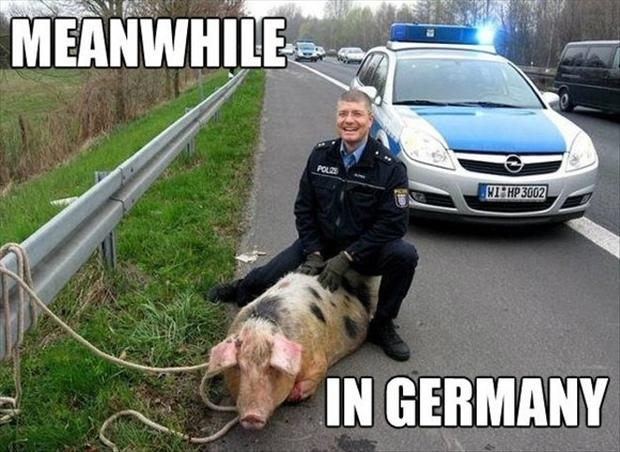 meanwhile in germany, cop and pig