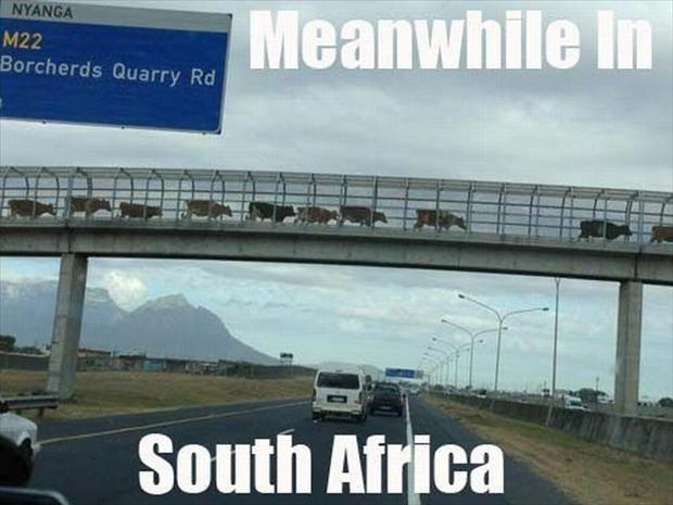 Meanwhile In South Africa Dump A Day