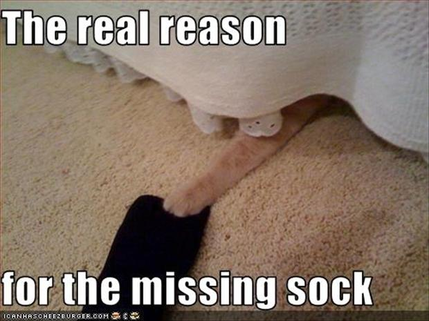 missing socks, funny pictures
