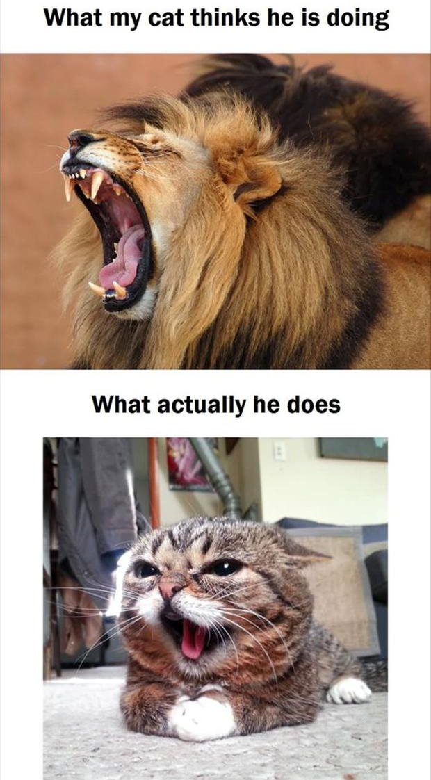 my cat growling, funny pictures