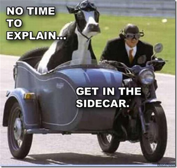 no time to explain, cow on motorcycle