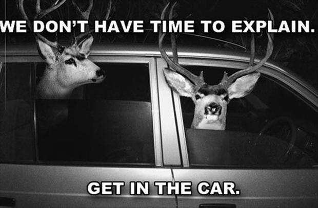 no time to explain, deer in a car