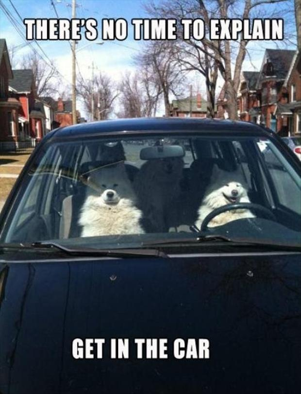 no time to explain, dogs in a car