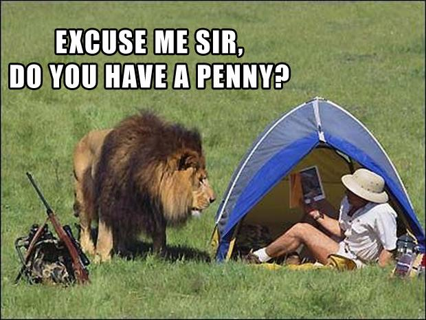 oh look a penny, lion