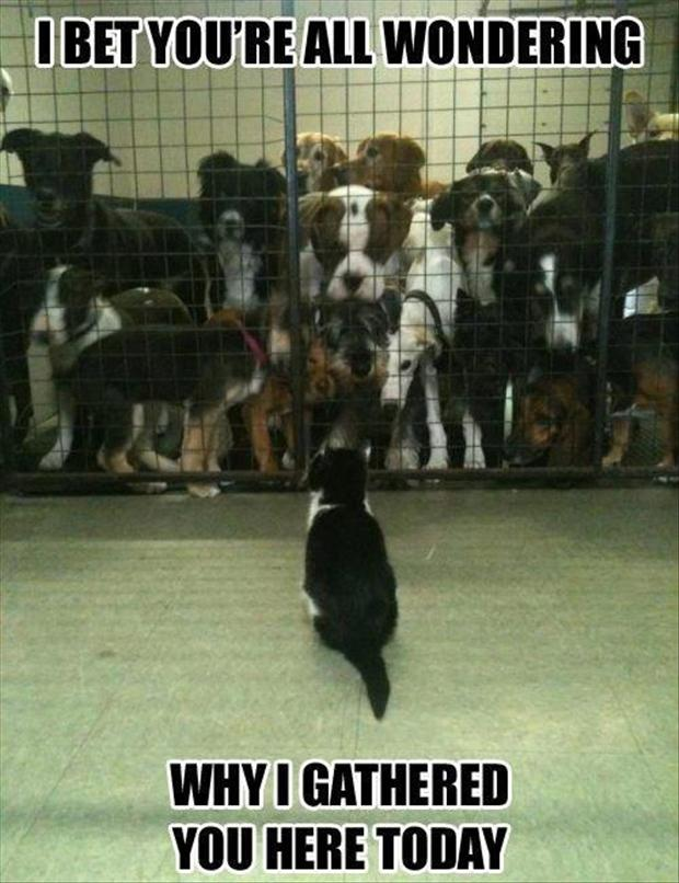 one cat and a lot of dogs, funny pictures