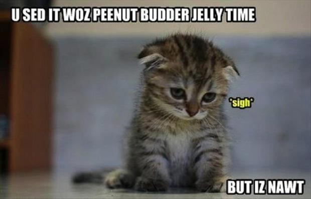 peanut butter jelly time, funny kitten