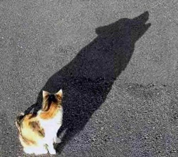 perfectly timed pictures, cat shadow