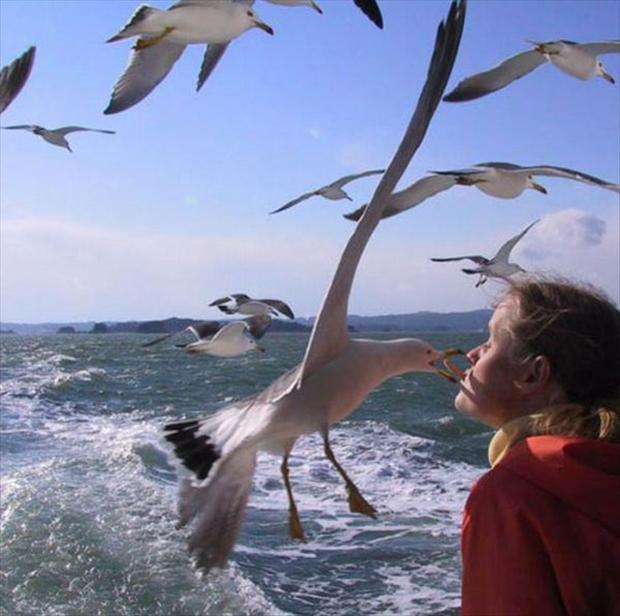 perfectly timed pictures, feeding seagulls