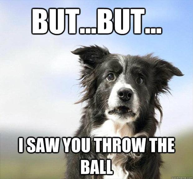 playing catch with dog