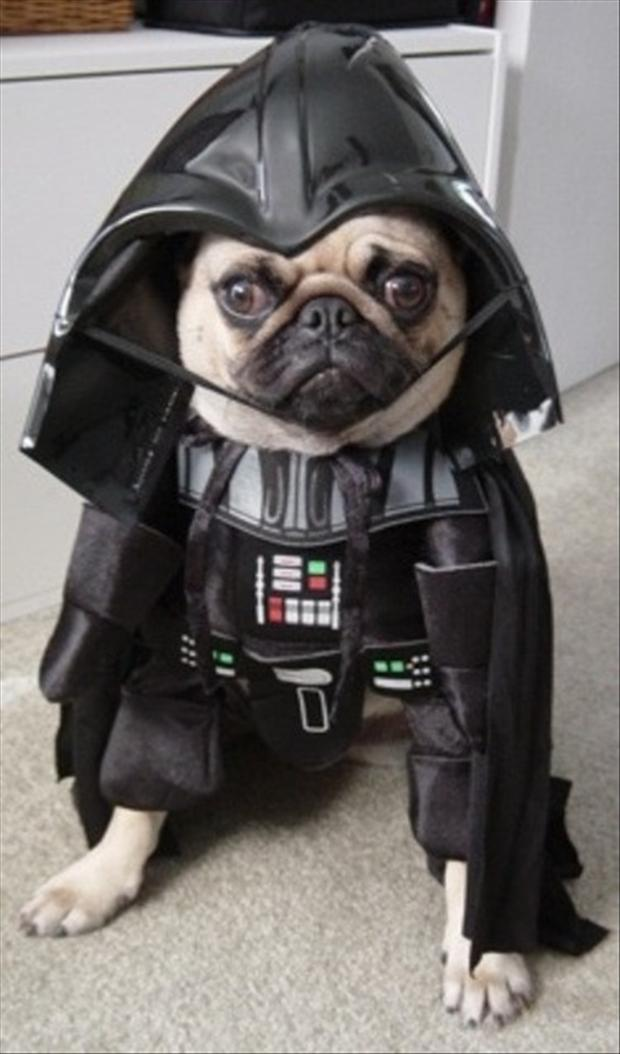 pug dog, darth vadar