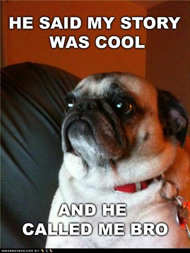pug dogs, cool story bro