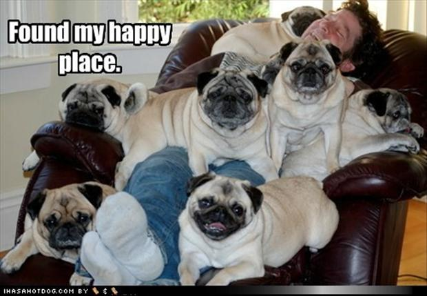 pug dogs, happy place