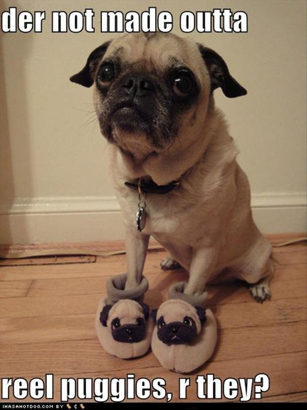 pug dogs, slippers