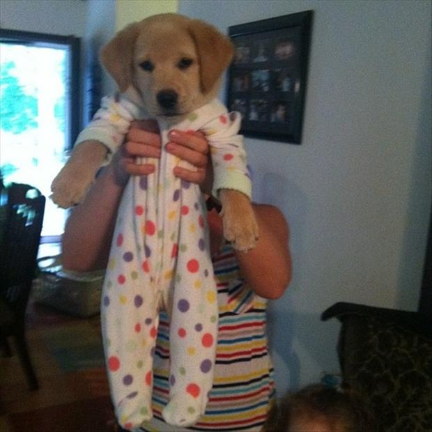 puppy in clothes