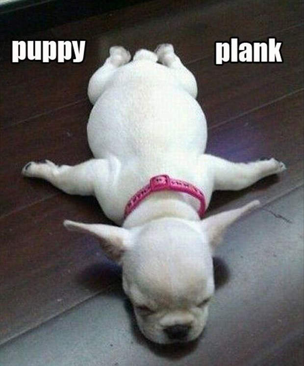 puppy plank, funny dogs
