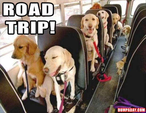 road trip, funny dogs