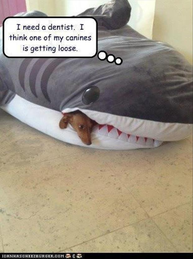 shark eats dog, funny pictures