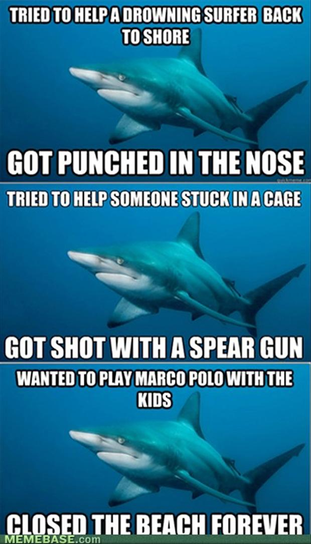 shark meme, funny pictures